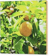 California Bright Orange Fruit Tree In Downtown Sacramento In Ca Wood Print