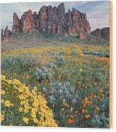 California Brittlebush Lost Dutchman Wood Print