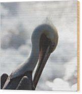 California Brown Pelican 1 Wood Print