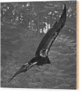 California Condor In Flight II Bw Wood Print