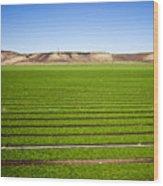 California Farm 14pdxl069 Wood Print