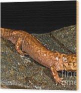 California Giant Salamander Wood Print