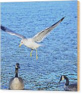 California Gull - Canada Geese Wood Print