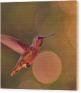 California Hummingbird Wood Print