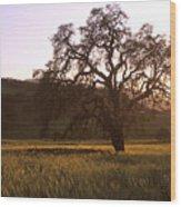 California Hwy 25 Oak Wood Print