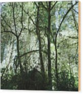 California Jungle Wood Print