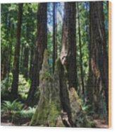 California - Muir Woods 006 Wood Print by Lance Vaughn