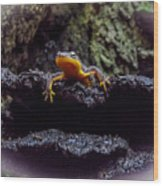 California Newt 2 Wood Print