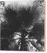 California Palm Tree Wood Print