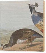 California Partridge Wood Print