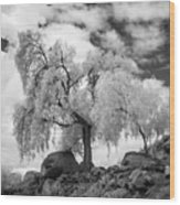 California Pepper Tree Wood Print