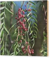 California Pepper Tree Leaves Berries I Wood Print