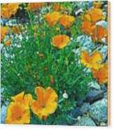 California Poppie In River Rock Wood Print