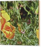 California Poppies In Mariposa, California Wood Print