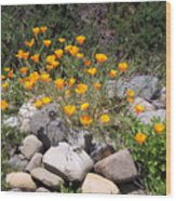 California Poppies Photograph Wood Print