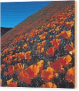California Poppies Quartz Hill Wood Print