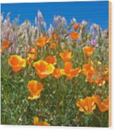 California Poppies, White Grasses And Blue Sky In Windy Antelope Valley Ca Poppy Reserve Wood Print