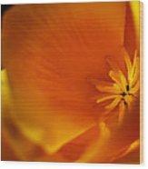California Poppy 1 Wood Print