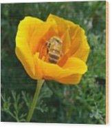 California Poppy And Honey Bee Wood Print