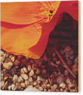 California Poppy And Scallop Shell Wood Print