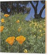 California Poppy Eschscholtzia Wood Print