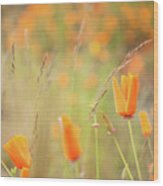 California Poppy Field 4 Wood Print