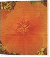 California Poppy Glow Wood Print