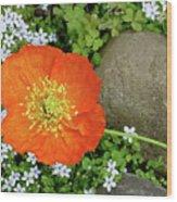 California Poppy Rock Garden Wood Print