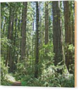 California Redwood Trees Forest Art Prints Wood Print