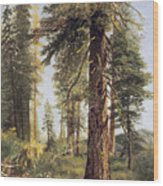 California Redwoods Wood Print