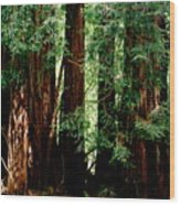 California Redwoods Wood Print