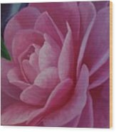 California Rose Wood Print