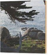 California Shade Wood Print