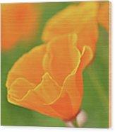 California Spring Poppy Macro Close Up Wood Print