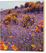 California State Flower Study Wood Print