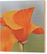 California State Poppy Macro Wood Print