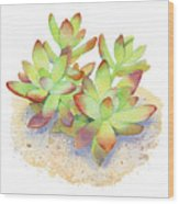 California Sunset Succulent Wood Print