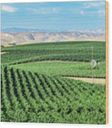 California Vineyards 1 Wood Print
