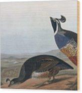 Californian Partridge Wood Print