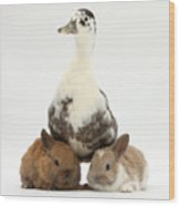 Call Duck And Baby Netherland Wood Print