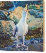 Call Of The Gull Wood Print