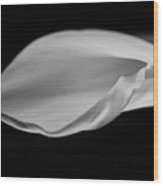 Calla Curl In Black And White Wood Print