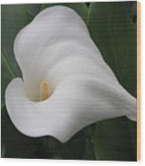 Calla Remembrance Wood Print