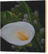 Calla In The Garden II Wood Print