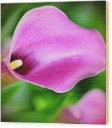 Calla Lilly Wood Print by Kathleen Struckle