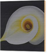 Calla Lilly Wood Print