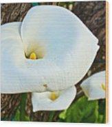 Calla Lily At Carmel Mission-california Wood Print
