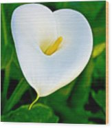 Calla Lily Closeup At Pilgrim Place In Claremont-california Wood Print