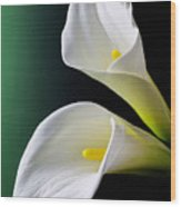 Calla Lily Green Black Wood Print