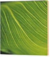 Calla Lily Leaf Wood Print